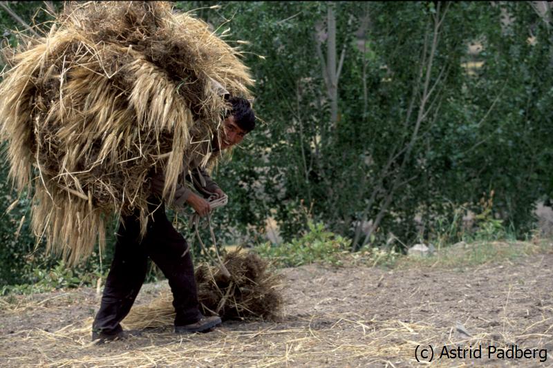 Feldarbeiter in Manggyu