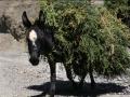 Mit Viehfutter belandener Esel