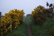 Weg an der Steilküste bei Porth Dinllaen