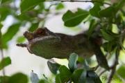 Exotic Reptile Parc
