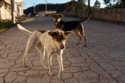 Straßenhunde, Cerocahui
