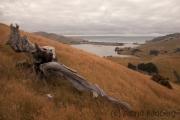 Otago, Harbour Cone