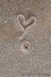 Das Herz des Wattwurms