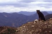 Hund in Kuelap