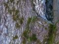 Raufußkauz (Aegolius funereus)