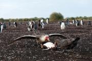Riesensturmvögel