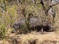 Flusspferde, Maramba River