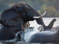 Elefanten queren den Sambesi