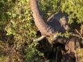 Elefant im Gebüsch