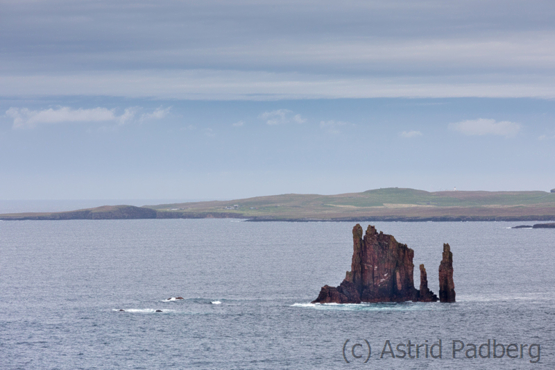 The Drongs, Ness of Hillswick