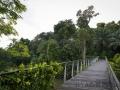 Botanischer Garten, Learning forest