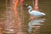 Reiher im Flamingoteich
