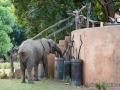 Elefanten im Track + Trail Rivercamp
