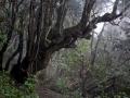 Organos Höhenweg, Baranco Madre de Agua