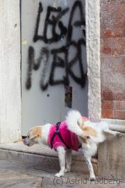 November in Venedig