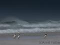 Pinguine im Sandsturm