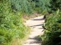 Weg in der Wahner Heide