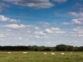 Siesta, Hamberger Moor