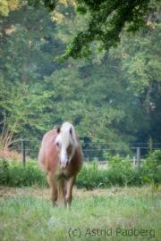 Pferde beim Haus Niedersachsen