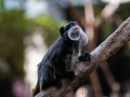 zoo_london_0008_web