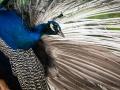 zoo_opole_pfau_2417_web
