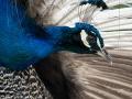 zoo_opole_pfau_2418_web