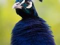 zoo_opole_pfau_2425_web