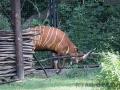 zoo_warschau_bongo_3561_web