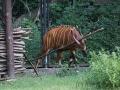 zoo_warschau_bongo_3563_web