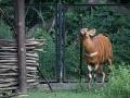 zoo_warschau_bongo_3573_web