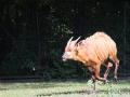 zoo_warschau_bongo_3593_web