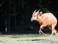 zoo_warschau_bongo_3594_web
