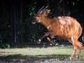 zoo_warschau_bongo_3598_web