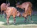 zoo_warschau_bongo_3661_web