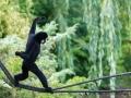 zoo_warschau_gibbon_3981_web