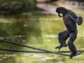 zoo_warschau_gibbon_3993-2_web