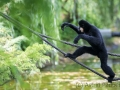 zoo_warschau_gibbon_4004_web
