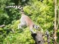 zoo_warschau_katta_3533_web
