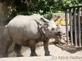 zoo_warschau_panzernashorn_3733_web