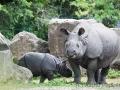 zoo_warschau_panzernashorn_3771_web