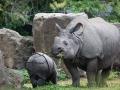 zoo_warschau_panzernashorn_3780_web