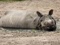 zoo_warschau_panzernashorn_3864_web