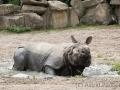 zoo_warschau_panzernashorn_3873_web