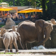 Elefanten vor Okavango