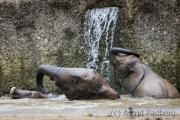 Jogi und Tuffi beim Bad
